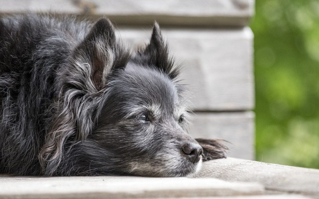 5 Reasons Why Senior Pets Make the Best Pets